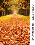 Beautiful Autumn Forest In...