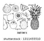 hand drawn vector illustration  ... | Shutterstock .eps vector #1311455510