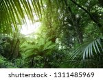 tree canopy in tropical jungle  | Shutterstock . vector #1311485969