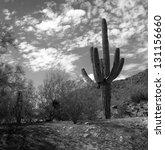 Monochrome Saguaro Cactus In...