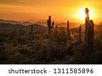 Golden Sunlight Bathes The...