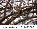 dry intertwined branches   Shutterstock . vector #1311625583