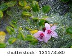 Pink Flowers Resting On Web An...