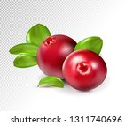 two cranberry with leaves on... | Shutterstock .eps vector #1311740696