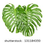 two bright tropical leaves with ... | Shutterstock . vector #131184350