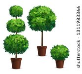 set of topiary trees in a pots. ... | Shutterstock .eps vector #1311983366