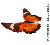 Stock photo orange butterfly isolated 1312010663