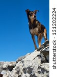 Small photo of Hiker's dog on summit. Shot on Ou Kraal trail, Table Mountain nature reserve, Cape Town, South Africa.