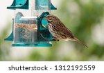 female house finch at backyard... | Shutterstock . vector #1312192559
