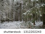 snow on the branches of a fir... | Shutterstock . vector #1312202243