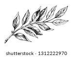 laurel branch sketch. botanical ...   Shutterstock .eps vector #1312222970