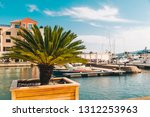 palms in sunny day dock with... | Shutterstock . vector #1312253963