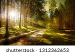 trail in the pine forest   | Shutterstock . vector #1312362653