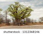 nxai pan n.p.  botswana   circa ... | Shutterstock . vector #1312368146