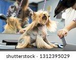 grooming animals  grooming ... | Shutterstock . vector #1312395029