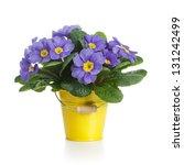 Small Bucket Of Lilac Primrose...