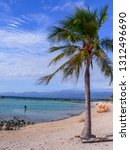 solitary palm tree at the... | Shutterstock . vector #1312496690