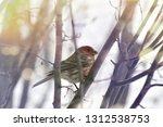 a beautiful finch sitting on a... | Shutterstock . vector #1312538753