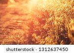 summer background  landscape at ... | Shutterstock . vector #1312637450