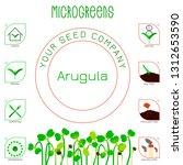 microgreens arugula. seed... | Shutterstock .eps vector #1312653590