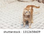 Stock photo ginger cat on the bed 1312658609