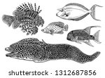 decorative coral fish set.... | Shutterstock .eps vector #1312687856