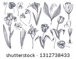 first spring flowers collection.... | Shutterstock .eps vector #1312738433