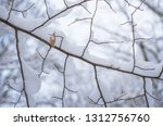 background of snow on the... | Shutterstock . vector #1312756760
