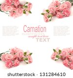 pink carnation isolated on white | Shutterstock . vector #131284610