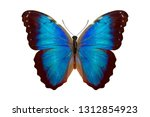 Blue Butterfly. Isolated On...