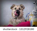 cute shaggy puppy | Shutterstock . vector #1312928180
