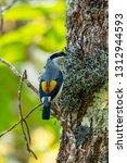 very cute blyth's shrike... | Shutterstock . vector #1312944593