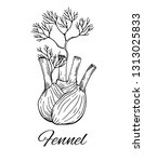 fennel hand drawn sketch.... | Shutterstock .eps vector #1313025833