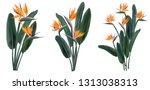 strelitzia reginae orange... | Shutterstock .eps vector #1313038313