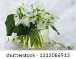 beautiful bouquet of snowdrops... | Shutterstock . vector #1313086913