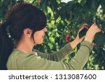 girl picking cherries | Shutterstock . vector #1313087600