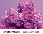 lilac flowers background.... | Shutterstock . vector #1313104436