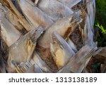 detail texture of trunk palm... | Shutterstock . vector #1313138189