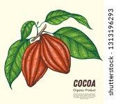 cocoa beans vector illustration.... | Shutterstock .eps vector #1313196293