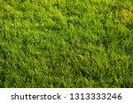 green meadow or lawn useful as... | Shutterstock . vector #1313333246