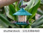 a close up view of wild small... | Shutterstock . vector #1313386460