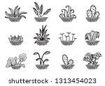 hand sketched vector vintage...   Shutterstock .eps vector #1313454023