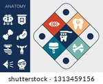anatomy icon set. 13 filled... | Shutterstock .eps vector #1313459156
