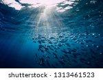 Underwater Wild World With Tuna ...