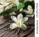 Dried Vanilla Sticks Vanilla Orchid - Fine Art prints