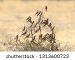 swarm of red headed finches in... | Shutterstock . vector #1313600723
