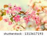spring season warm sunny floral ... | Shutterstock . vector #1313617193