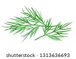 dill isolated on white with... | Shutterstock . vector #1313636693