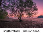 the background of the twilight... | Shutterstock . vector #1313645366