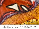 Butterfly Pattern Texture...